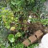 玄関先の植栽を植え替え