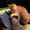 相性が難しい猫の多頭飼い
