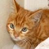 【エンジンルームの危機】重傷の猫ちゃんかと思ったら、なんと ~猫バンバンは大切です~