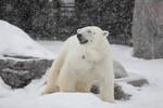 雪の中の旭山動物園、元気な動物たち。 @2月の旭山動物園