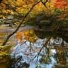 秋の川風景