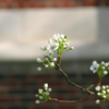 tree in bud appearanceとは何か