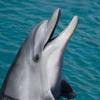 香港の海にピンクドルフィンが戻ってきた!