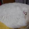 【14本目】猫様の睡眠