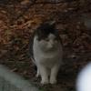 近所で猫さがし~新しい命