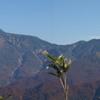 2011年、紅葉第二弾、赤兎山に行って来ました