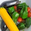 農家ブログ☆【自家野菜】でジンギスカン☆