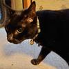 猫の給水器と心層の迷宮の話
