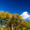 秋の写旬到来 2016 !!山中湖でダイヤモンド富士&山中湖紅葉祭りに行ってきました (^^♪