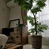 多摩地区でおすすめの大型園芸植物店おすすめ5店!!!