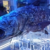 沼津の静岡県一面白い水族館!深海魚水族館!