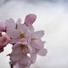 そろそろ梅が咲くのかな