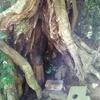 漂泊No.1- 5[松江八重垣神社,伊勢へ180314(6・7日目)]【漂泊001】【紀行】