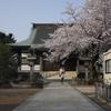 流山のお花見スポット 樹齢400年の枝垂れ桜