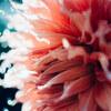 AI Micro-Nikkorで秋のお花を撮影しました@神代植物公園