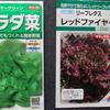 冬の野菜サラダは