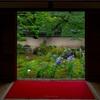 京都・東山 - 桔梗を愛でる特別拝観 東福寺天得院