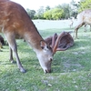 お天気のいい日に奈良公園で鹿さんにいやされる