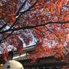 紅葉狩りin嵐山 京都