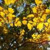山梨県の魅力溢れる低山の紅葉!