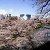 千鳥ヶ淵の桜を撮影