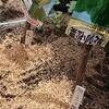無農薬小松菜と無農薬チンゲン菜@新潟EMBC複合発酵バイオで栽培する健康農産物