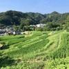三浦半島に残る日本の原風景 上山口の棚田(葉山町)