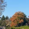 昭和記念公園の紅葉その2