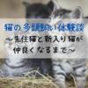 猫の多頭飼い体験談~先住猫と新入り猫が仲良くなるまで~