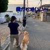 8月25日は、埼玉県知事選挙投票日