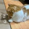 分身の術?るるちゃん+猫耳の影が2つで3匹の猫さん。