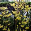 黄色とピンク 〜わが家の花たち〜