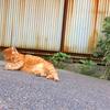 近所にいる猫さまたち。横浜山元町付近。