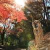 秋いろの里山さんぽ🐾