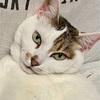 【臆病な猫】日々の生活と私の体験談⑤!!