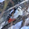 伝習館の鳥たち
