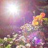 江ノ島で逆光撮影の練習(NOKTON classic 35mm F1.4 SC作例)