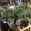 【MULBERRY GARDEN】さいたま新都心の園芸ショップ、マルベリーガーデンに行ってきました!!