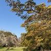 小石川植物園8