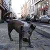 ベルギー・ブリュッセル『チョコレートの街』