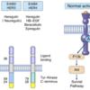 HER2変異陽性肺癌 治療薬開発:抗体薬物複合体(antibody-drug conjugate, ADC)と受容体チロシンキナーゼ阻害剤