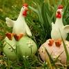 卵のサイズS、M、L、LLの違いは?タマゴが夏場水っぽいのはなぜ?