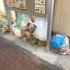 #武蔵小杉の町会朝清掃