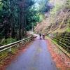前日の雨と暴風の影響で林道は酷道に‥(涙)