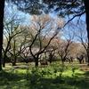 【かなしみ】新宿御苑がコロナVirusの影響で暫く閉園…3/25に行ったので記します
