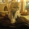 池袋の猫カフェ「299」にいってきました( ˊ̱˂˃ˋ̱ )