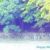 心身の健康と幸福感度を高める森林浴