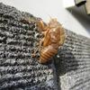 荷を解いて葉裏に休む蝉の殻