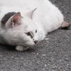 6月4日 芝から北品川まで猫さま歩き とその情景
