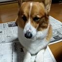 新・ばたばたの日記「所思管鉄」(Shoshi-Kantetsu)